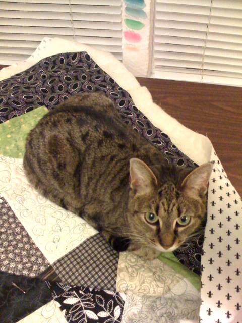 Daphne and quilt