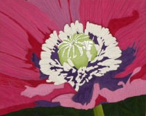 Blooming Poppy : 34x27