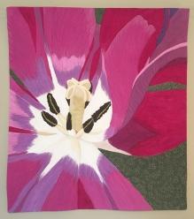 Tulipa : 30x34